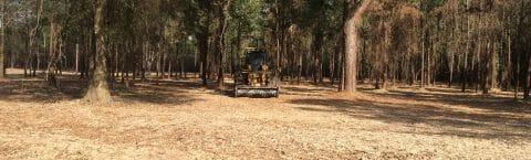 Whitehead Environmental Land Clearing